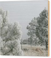 Frozen Fog On Pine Trees Wood Print
