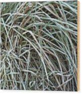 Frozen Grass - Ground Frost Wood Print