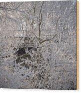 Frozen In Ice Wood Print