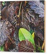 Frozen Oak Leaves, Glenveagh National Wood Print