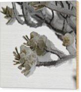 Frozen Pines 1 Wood Print