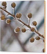 Frozen Seed Capsules In Time Wood Print
