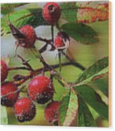 Fruit Of The Wild Rose Wood Print