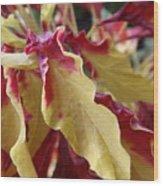 Fruit Roll Up Plant Wood Print