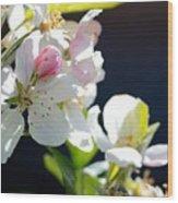 Fruit Tree Blossom Wood Print