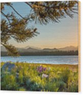 Frye Lake Flowers Wood Print