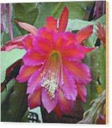 Fuchia Cactus Flower Wood Print