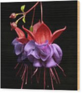 Fuchsia - Tiny Dancers Wood Print