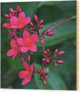 Jatrohpa Bush Blooms Wood Print