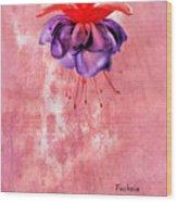 Fuchsia Blue Eyes Wood Print