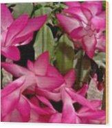 Fuchsia Christmas Cactus Wood Print