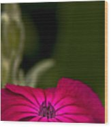 Fuchsia Delight Wood Print