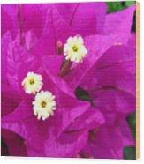 Fuchsia Flowers Wood Print