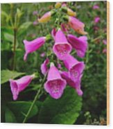 Foxglove Lure Wood Print