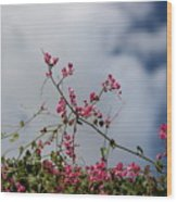 Fuchsia Mexican Coral Vine On White Clouds Wood Print
