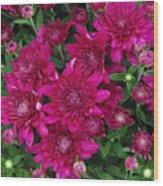 Fuchsia Mums Wood Print