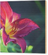 Fuchsia Palette Wood Print