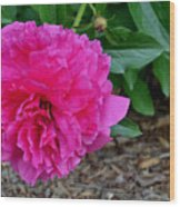 Fuchsia Peony Wood Print