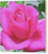 Fuchsia Rose Wood Print