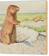 Fuertes, Louis Agassiz 1874-1927 - Burgess Animal Book For Children 1920 Prairie Dog Wood Print