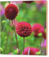 Full Bloom Reds Wood Print