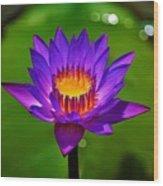 Full Blossom  Wood Print
