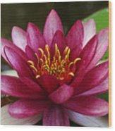 Full Lotus Wood Print