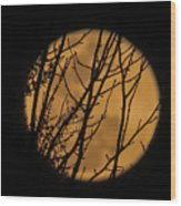Full Moon Through The Branches Wood Print