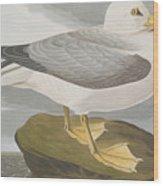 Fulmar Petrel Wood Print
