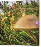 Funghi, Cashel Forest Wood Print