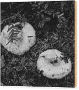 Fungi No 3 Bw Wood Print