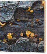 Fungi On Log Wood Print
