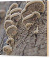Fungui Growing On A Tree Trunk Wood Print