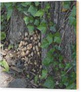 Fungus At Base Of Tree Wood Print