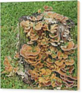 Fungus Bouquet Wood Print