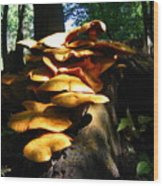 Fungus Colony 23 Wood Print