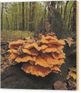 Fungus Wood Print