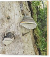Fungus Grows On A Tree Trunk Wood Print
