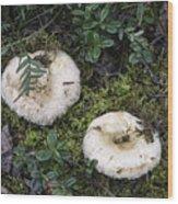 Fungi No 3 Wood Print