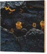 Fungus On Log Wood Print