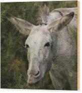 Funky Donkey Wood Print