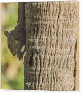 Funky Ear Squirrel Wood Print