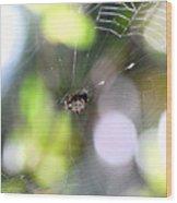 Funky Spider Wood Print