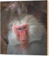 Funny Baboon Wood Print