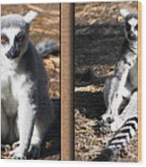 Funny Lemurs Wood Print