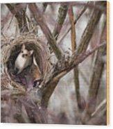 Funny Little Bird Wood Print
