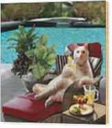 Funny Pet  Vacationing Kitty Wood Print