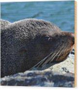 Fur Seal Wood Print