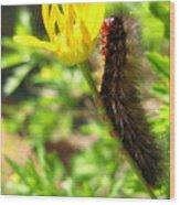 Furry Caterpillar On A Yellow Flower Wood Print