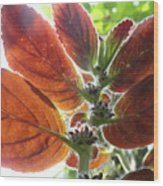 Furry Flora 2 Wood Print